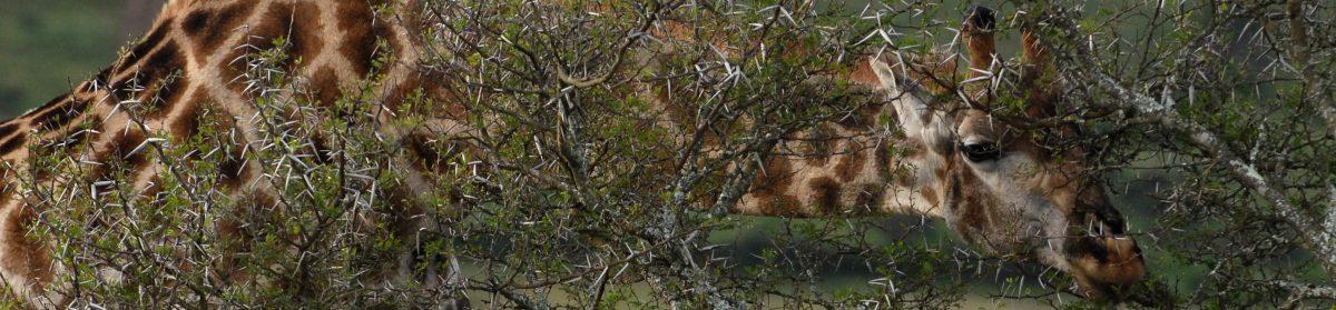 KJR Wildlife Photography